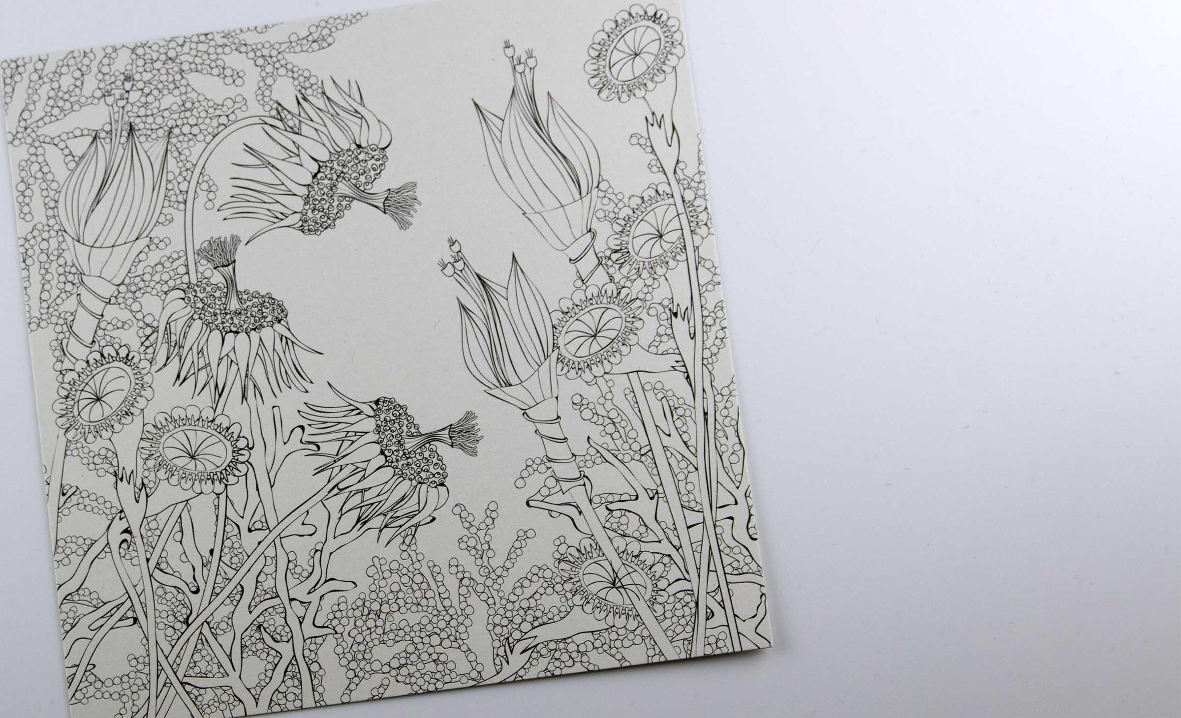 Wunderblumen Postkarten von graphit-d